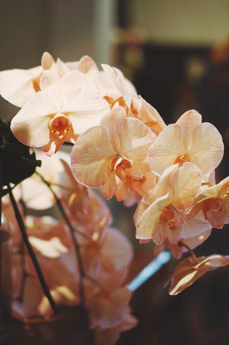 the-village-florist-corporate-events-plants